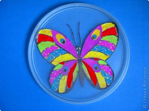 Коллекция насекомых фото 2