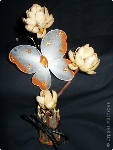 Эти необычные цветы освещают прелестные бабочки и всем напоминают о лете.