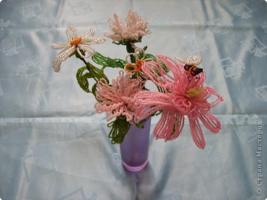Эти цветы всю зиму будут напоминать нам о лете фото 1