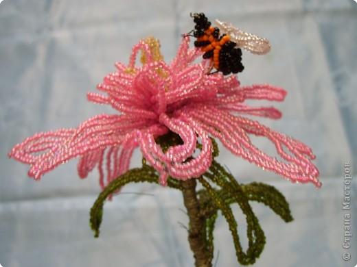 Эти цветы всю зиму будут напоминать нам о лете фото 2