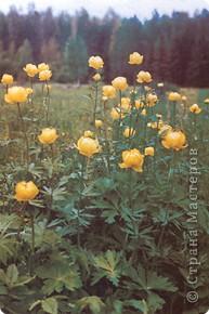 Золотой италмас фото 2