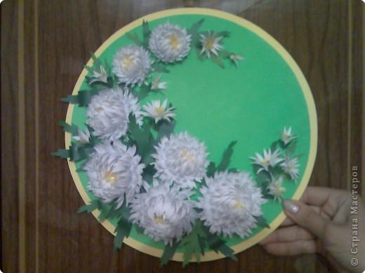 Хризантемы в подарок фото 1
