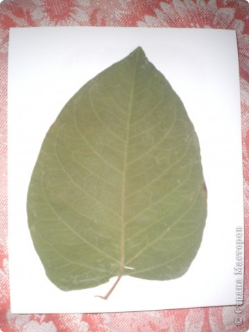 Вот такая ёлочка получилась из гербария. фото 2