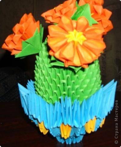 мой цветущий кактус фото 2