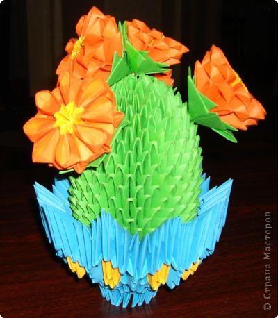 мой цветущий кактус фото 1