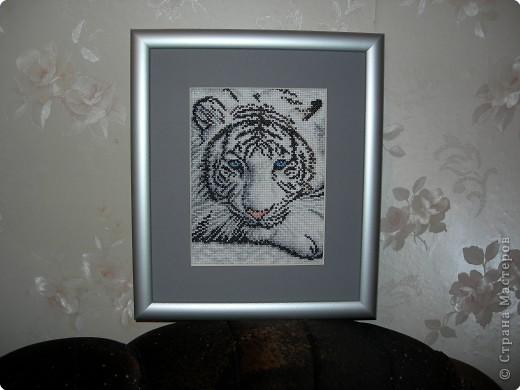 белый тигр символ наступающего года