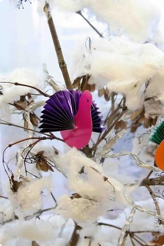 Зимний сад фото 3