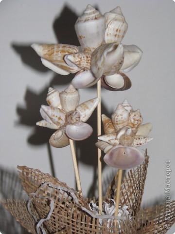зимние цветы фото 2