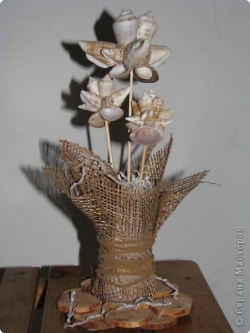 зимние цветы фото 1