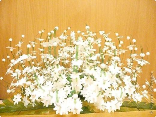 Зимний цветок фото 1
