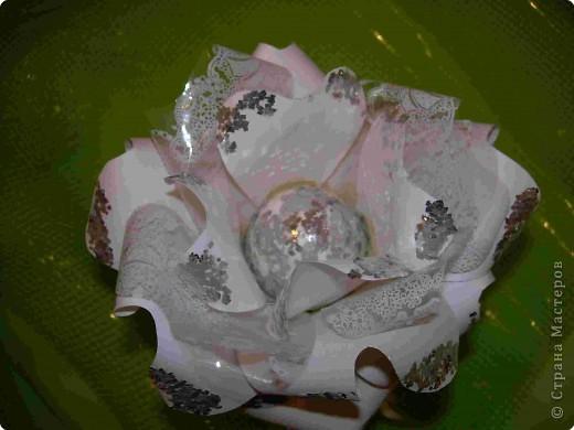 Роза с мороза фото 2