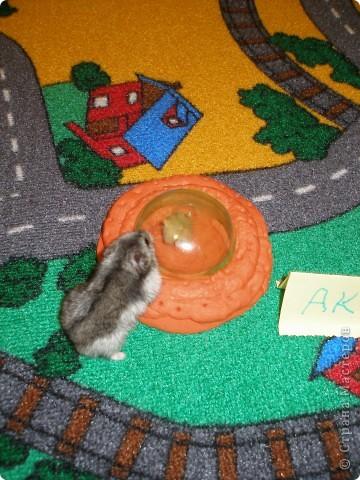 У меня есть маленький хомячок, и вот он очень скучал, мы с ним конечно играем, но он хотел встретить другого хомяка. И я решил ему помочь... и сделал летающюю тарелку. На этой тарелке к моему хоме прилетел новый друг. фото 2