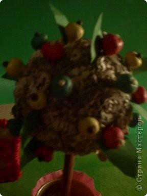 Моя яблонька будущего в лучах солнышка и подсолнышка. фото 10