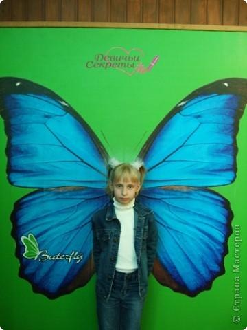 Биология мир бабочек и насекомых в