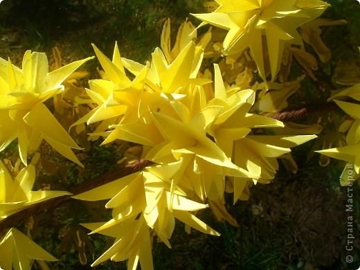 Наступила настоящая весна!!! В городе зацвели потрясающие кустики форзиции.  фото 2