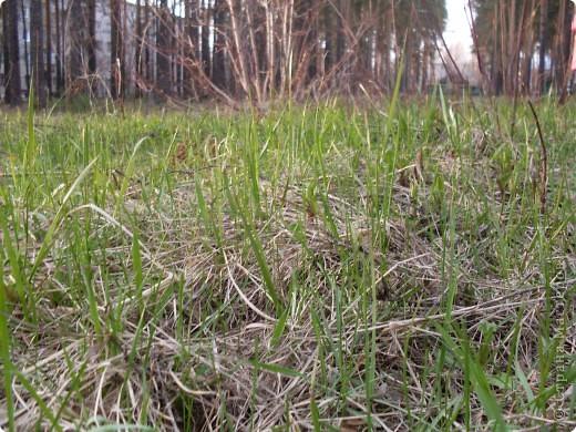У нас на Урале до буйного цветения ещё далеко,поэтому мы решили обратиться к сказке,для этого у нас самый подходящий возраст,Софие 3г 4м фото 4