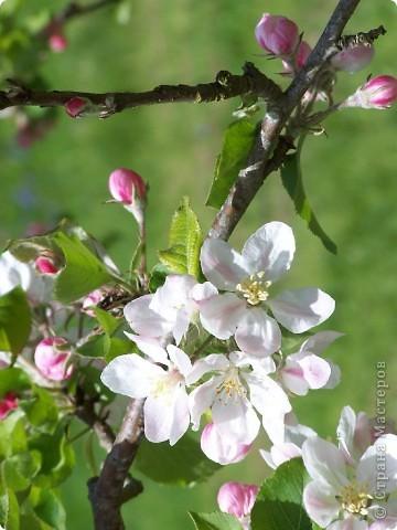 "Декоративное панно ""Цветущая яблонька"" фото 2"