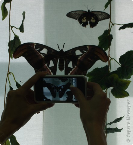 """Вырезание """"Бабочки"""" фото 2"""