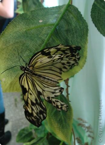 """Вырезание """"Бабочки"""" фото 3"""