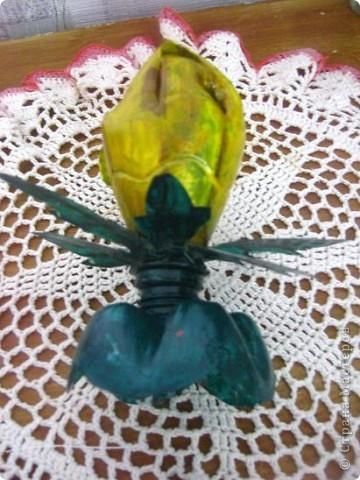 мой тюльпан фото 4