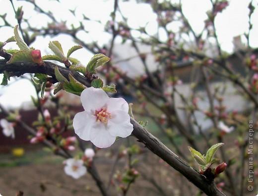 Вот такая веточка вишни с первым цветком у меня получилась:  фото 3
