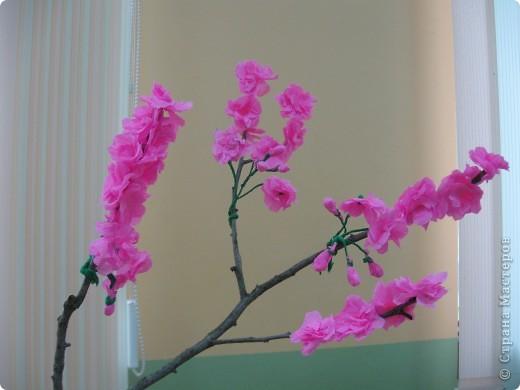 цветущая ветка сакуры фото 1