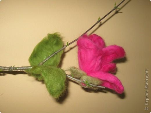 цветок магнолии фото 1