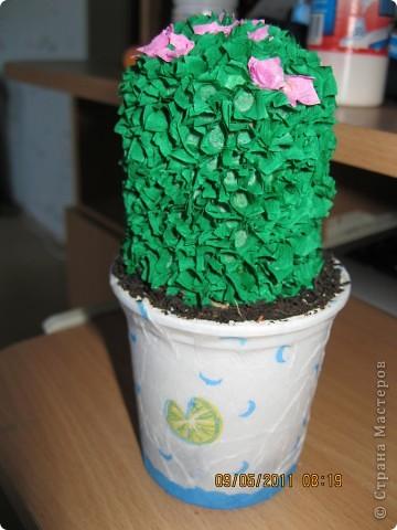 Gymnocactus viereckii ( техника торцевание) фото 3