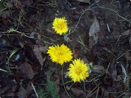Седьмого мая в нашем лесу раскрылись первые цветочки. Я их решила связать из пряжи. фото 4