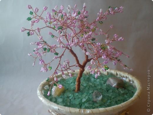 Теперь  цветущая сакура украшает наш дом. фото 1