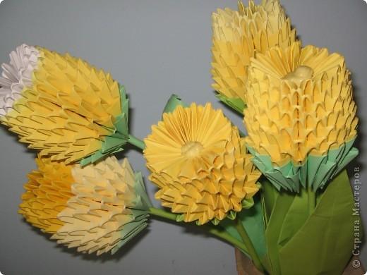 Вот такие жёлтые тюльпаны, которые покорили нас красотой и изяществом. фото 1