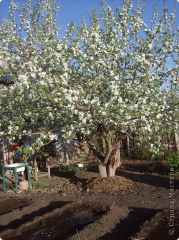 Что может быть прекраснее цветущей яблони весной! Такая яблоня получилась у меня. А вдохновение пришло от яблони в моём саду. фото 2