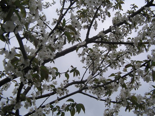 Весной их много в нашем городе, который так любит солнце. фото 3