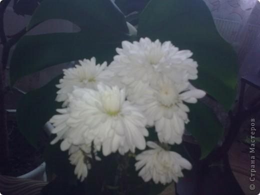 """""""Цветы Весны!"""" Весенняя композиция из бросового материала, с использованием различных техник: папьемаше, квилинг, живопись. фото 6"""
