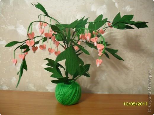 Дицентра-растение очень изящное и красивое фото 1