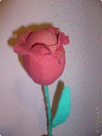 Чудо - тюльпан. фото 1