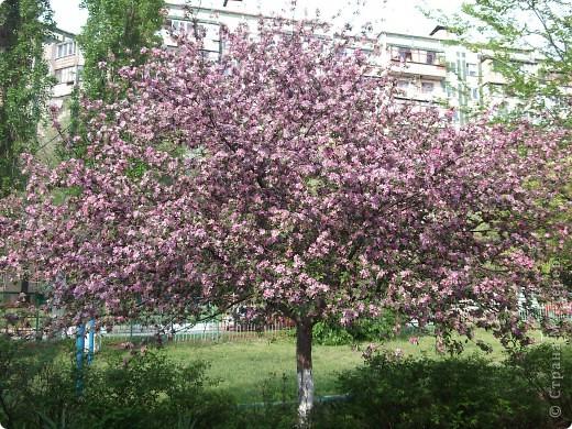 На этой картине Даниил (под маминым руководством) изобразил цветущую веточку розовой яблони.    фото 5