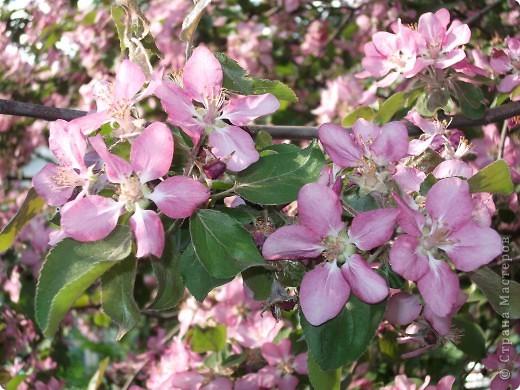 На этой картине Даниил (под маминым руководством) изобразил цветущую веточку розовой яблони.    фото 4