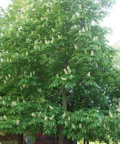 На этой картине я разместил цветок каштана - удивительного дерева, которое очень красиво  цветет весной. фото 5