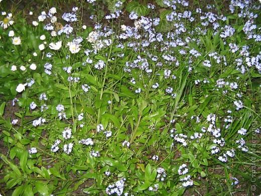 А у нас распустились цветы белее снега. фото 4