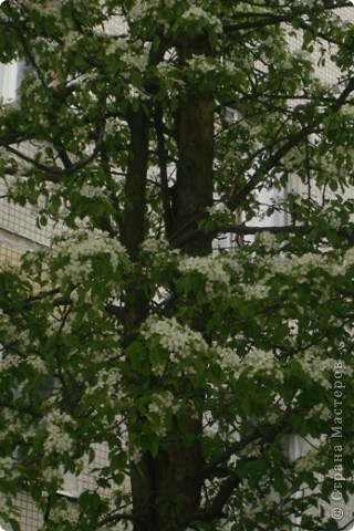 Цветущий сад  фото 3