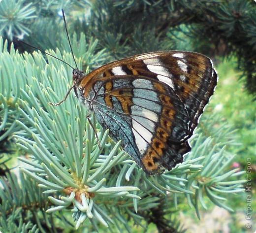 Такую бабочку в технике витраж Оля сделала по фотографии. Только цвета пришлось изменить, т.к. исходили из имеющегося набора бумаги для витражей. На окне работа смотрится красиво. фото 5