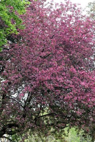 Вот такой весенний цветник мне захотелось сделать для своей старшей дочери фото 5
