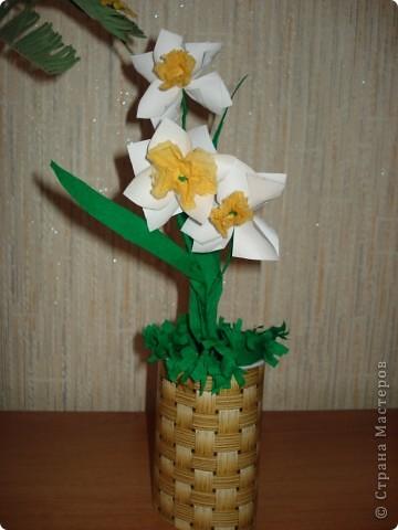 Нарцисс  для любимой бабули фото 1