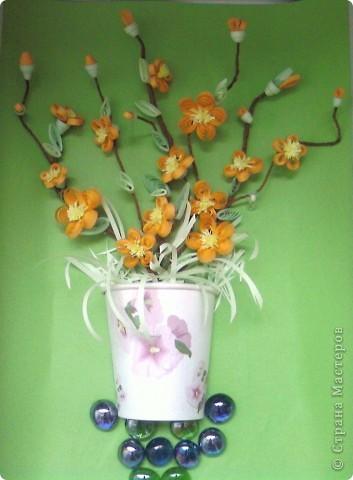 Цветущий кустарник весной. Японская айва. фото 3