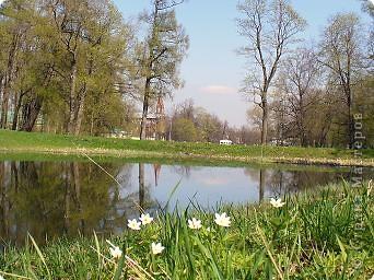 Весна вдохновила меня расписать подснежниками-ветреницами стеклянную банку. фото 7