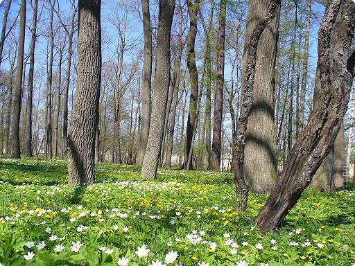 Весна вдохновила меня расписать подснежниками-ветреницами стеклянную банку. фото 4