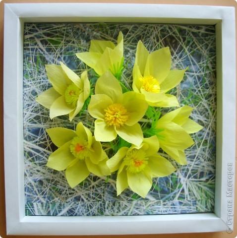 Эти солнечные весенние цветы расцвели у нас в тени соснового бора.  Они называются сон-трава или прострел. фото 1
