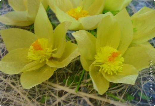 Эти солнечные весенние цветы расцвели у нас в тени соснового бора.  Они называются сон-трава или прострел. фото 2