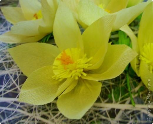 Эти солнечные весенние цветы расцвели у нас в тени соснового бора.  Они называются сон-трава или прострел. фото 3